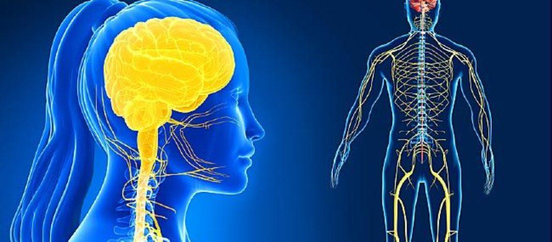 nervous-system-cover